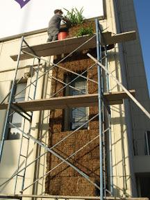 decembre 2011 premier mur vegetal en sphaigne sur Dubai