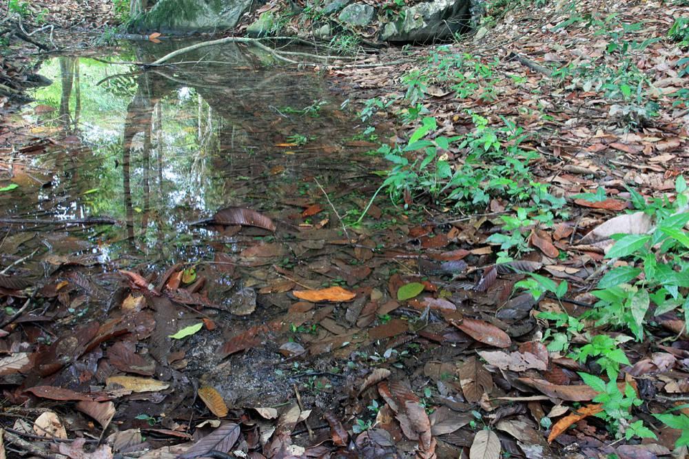 Лужу в пойме реки Spora облюбовала С. ferruginea var. ferruginea. Фото: Д. Логинов.