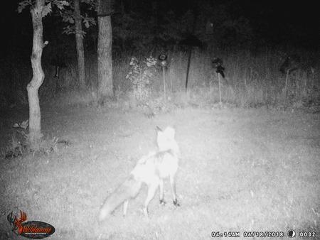 Fox June 18