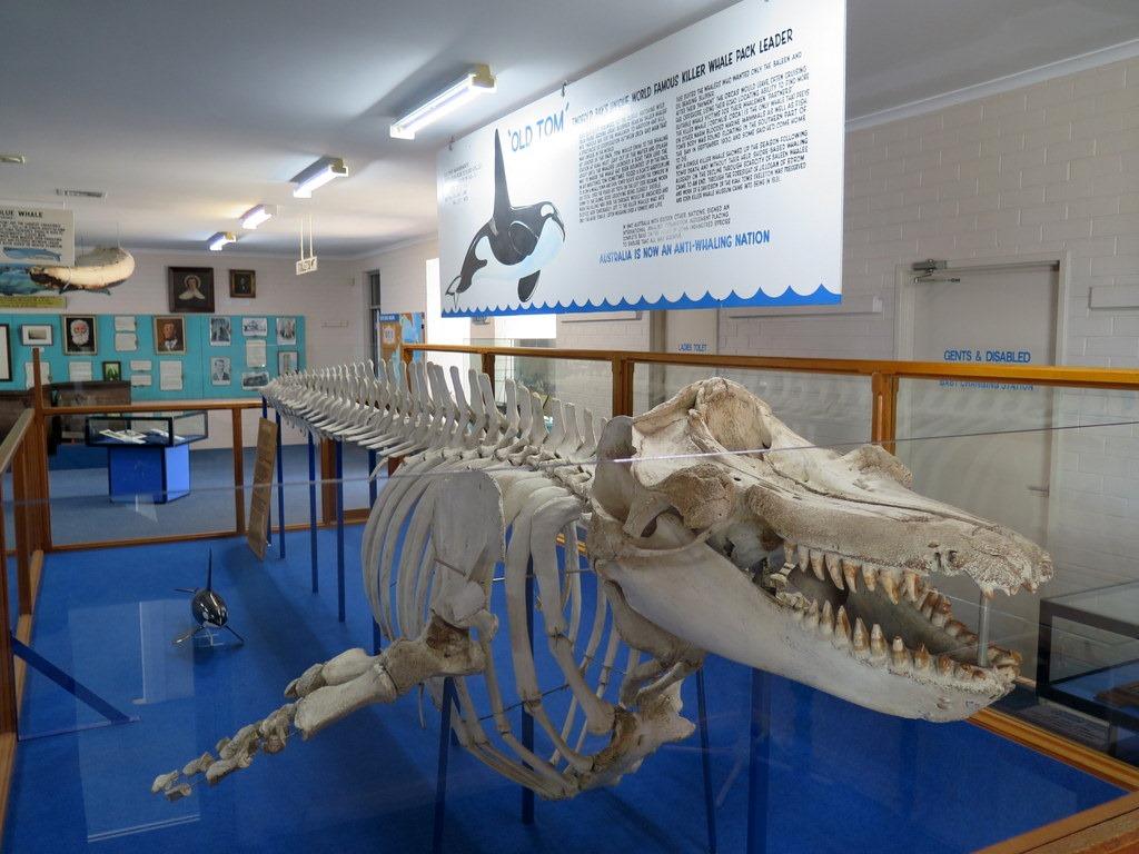 [171122-044-Eden-Killer-Whale-Museum3]