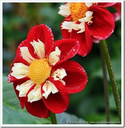 160906_Butchart_Gardens_0096