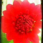 20120817-01-red-flower.jpg
