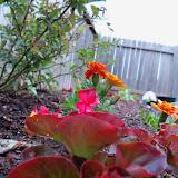 Gardening 2010 - 101_0504.JPG