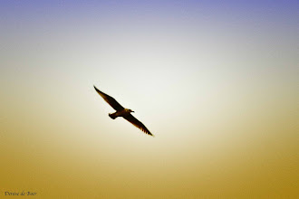 Photo: Pretty bird boven IJsselmeer. 18-12-2012.