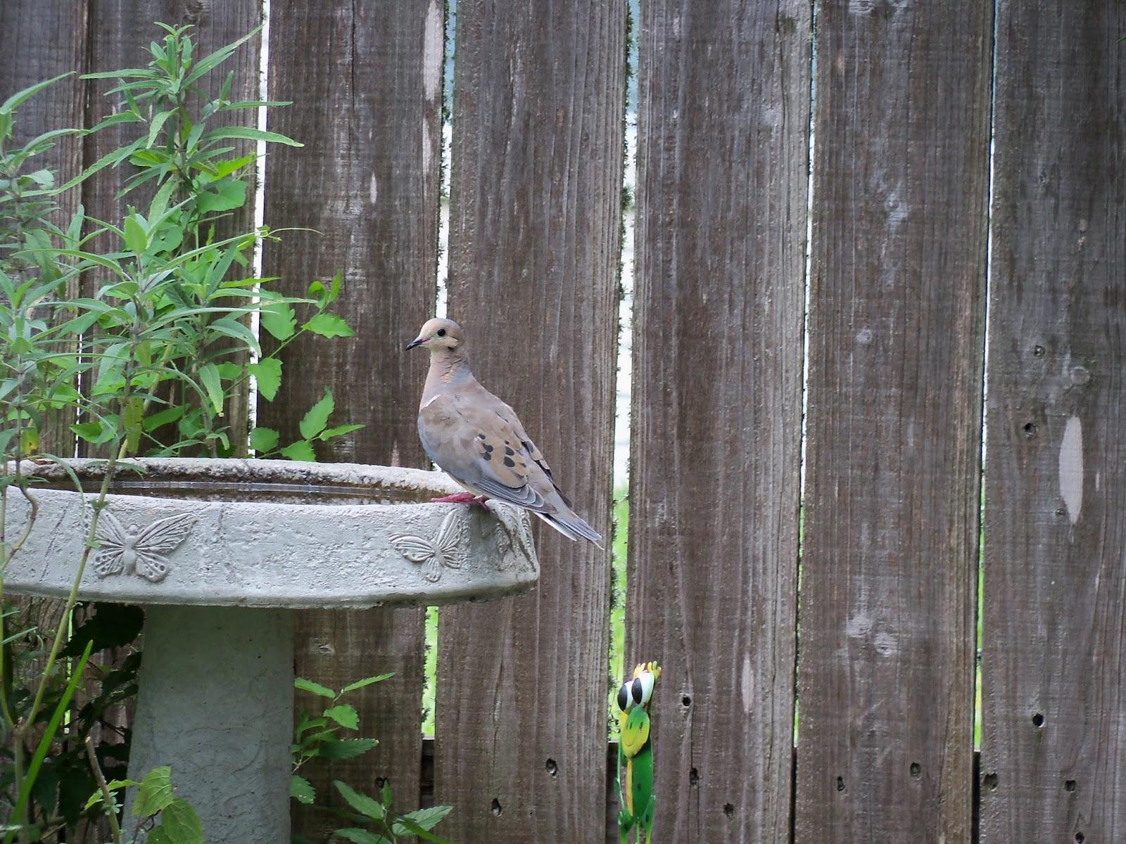 Gardening 2015 - 117_0030.JPG
