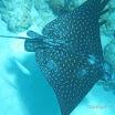 Buck Island Reef - IMGP1257.JPG