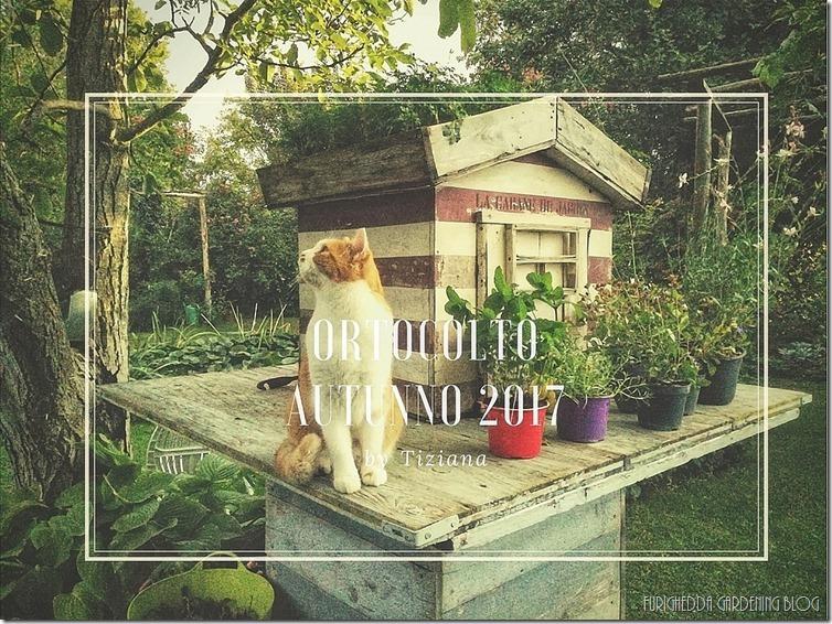 Ortocolto Autumn 2017-01