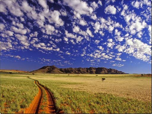 Tok Tokkie, NamibRand Reserve, Namib Desert, Namibia.jpg