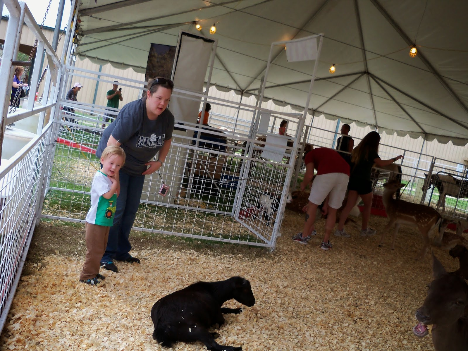 Fort Bend County Fair 2014 - 116_4269.JPG