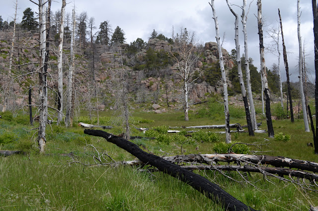 grass and burned trees and layered rocks