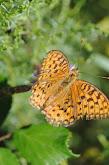 mariposas yotros 083.JPG