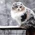 23 грудня синоптики обіцяють сніг і поривчастий вітер: якою буде погода на Полтавщині