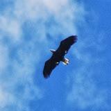Hawk Watch 2013