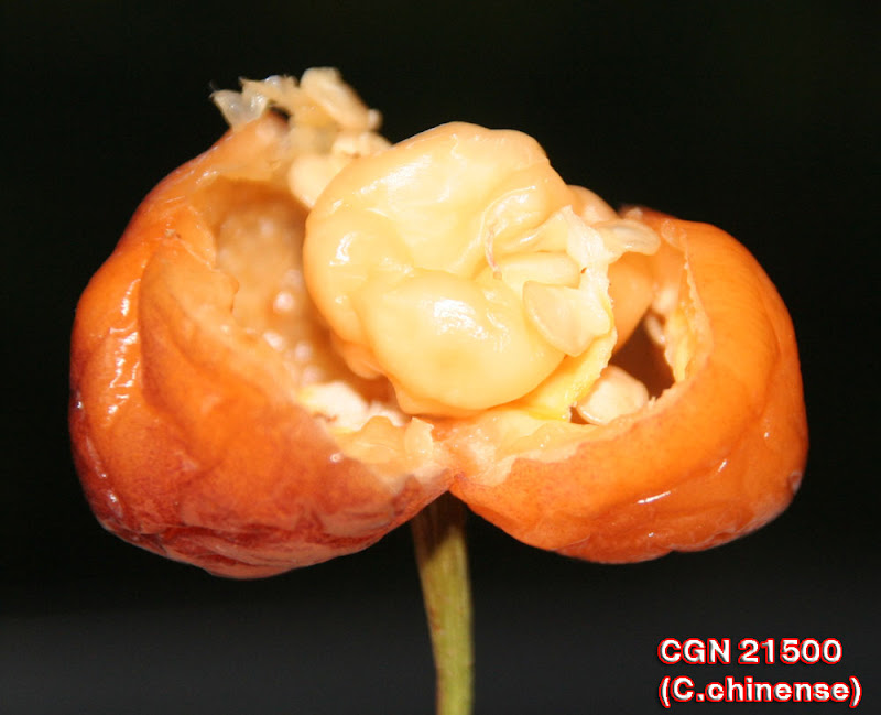 CGN21500_fruit_with_inside_fruit3.jpg