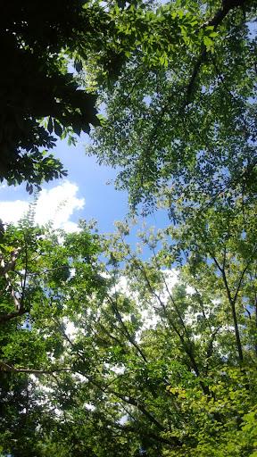 2012-08-05 11.19.01.jpg