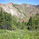 Un vallon à Kara Unkur (2600 m). Biotope de Parnassius mnemosyne. 18 juillet 2006. Photo : J.-M. Gayman