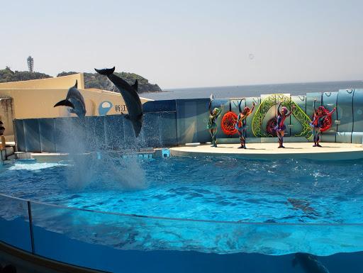 [写真]ジャンプするイルカたち