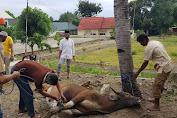 AKBP Puji Saputro Pimpin Kegiatan Sembelih Hewan Qurban Polres Soppeng