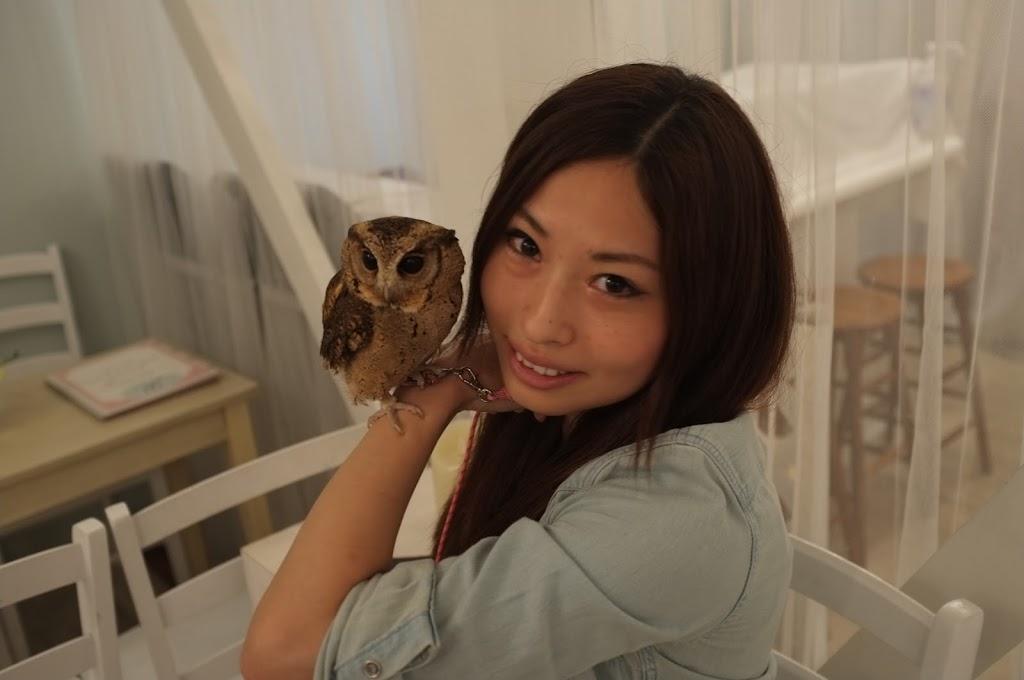 Fukurou, owl cafe in Tokyo