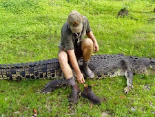 crocodile_harvesting_7L.jpg