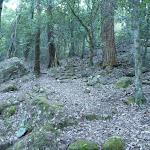 Heading downhill east of Wollombi Brook (366131)