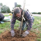 Hammo Planting - Shannon Schiesser - IMG_4912.JPG