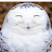 caryn white avatar image
