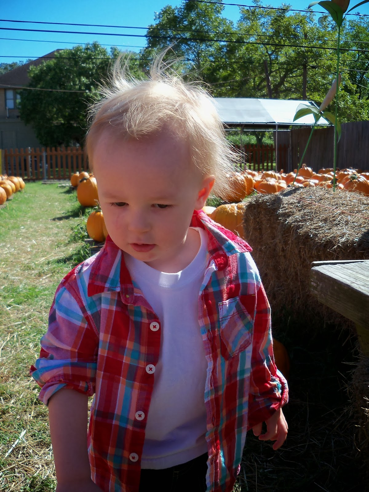 Pumpkin Patch - 115_8223.JPG