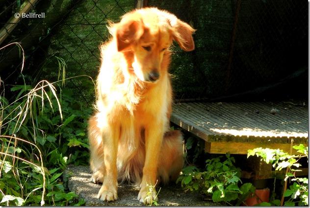 Hund sucht Almkanal (3)