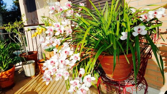 rome may break flowers http://isafashionebella.blogspot.com #flowers #spring2016