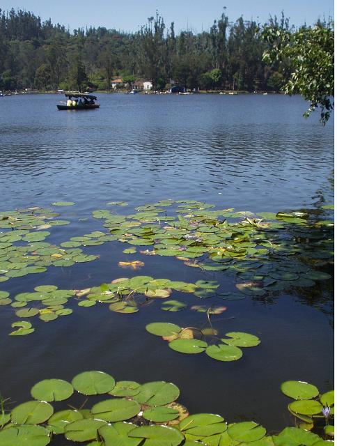 Beautiful Kodaikanal Lake, Kodaikanal Lake Images