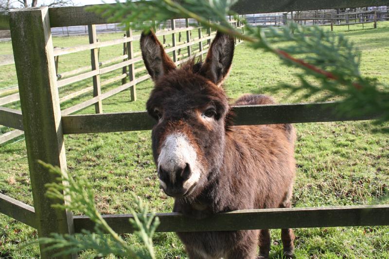03 donkey gatton wood