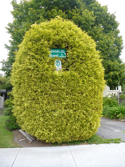 Street signs consumed by some corpulent shrubbery – Victoria, BC (photo by Stephen Lund)