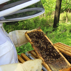 PLC Beekeeping Class 5/20/18 - IMG_8116.jpg