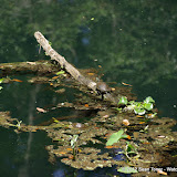 04-04-12 Hillsborough River State Park - IMGP4417.JPG