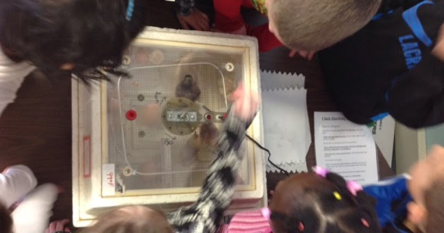 Day 122 - Catching up with what we've studied in science - Mrs. Maiorana - Francis Wyman Grade 1