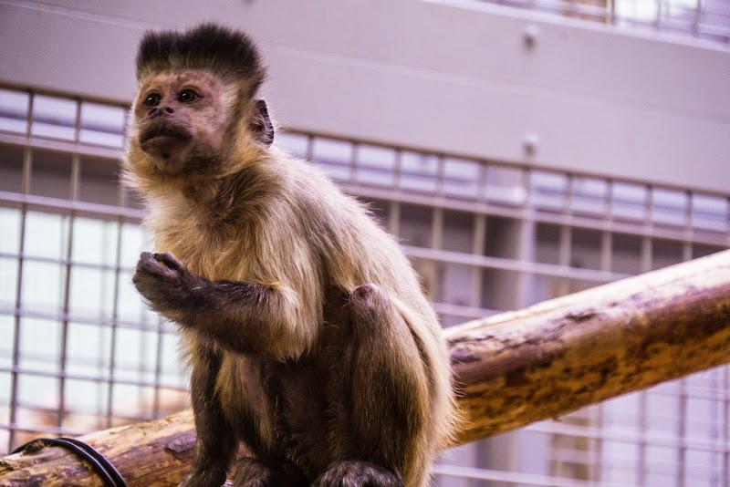 札幌 円山動物園 写真6