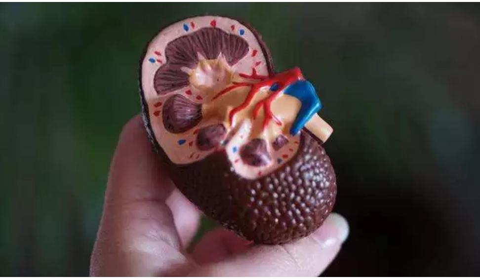 Hipertensi dan Diabetes Jadi Picu Utama Gagal Ginjal