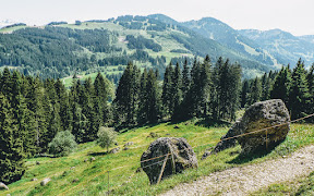 Gunzesried Dürrehorn Alpe, Nagelfluhkette Allgäu kühe