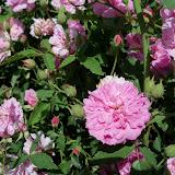 Gardening 2012 - 115_1738.JPG