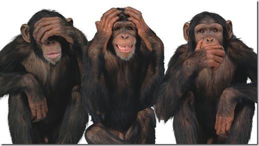 Drei Schimpansen