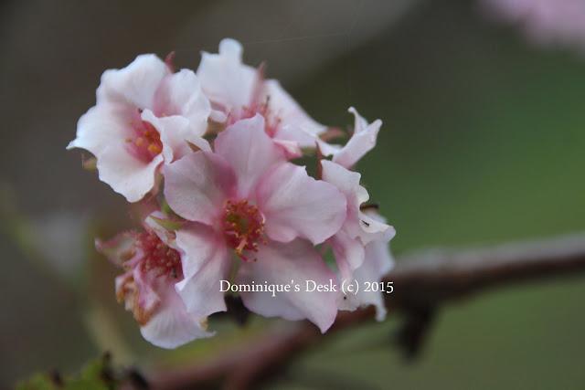 Pink cluster bloom