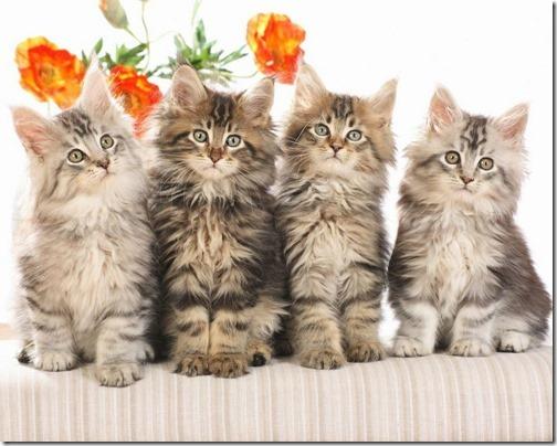 fotos de gatos (8)