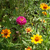 Gardening 2010, Part Three - 101_4391.JPG