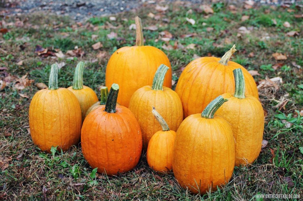 [pumpkin5%5B8%5D]