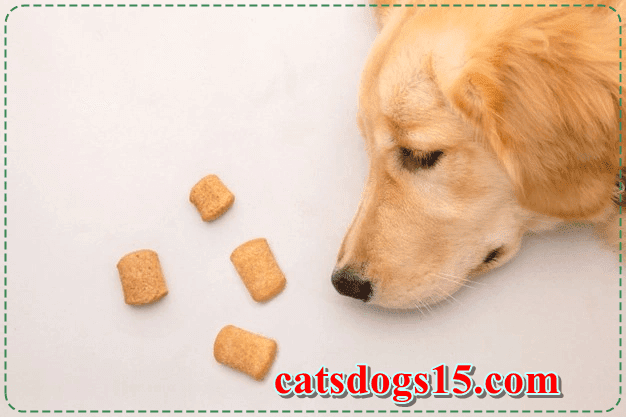 dog food,cat food,cat,what you need to know before getting a cat,pet food,raw dog food diet,dog,science diet dog food,hill's science diet dog food,what do i need to know before getting a cat,what do i need to take care of a cat,healthy cat food,the truth about prescription diets for dogs,natural balance dry cat food,how to understand your cat,diets for dogs and cats,natural balance cat food,how to find a common language with your cat,food for fat cats,best and worst foods to eat