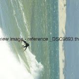 _DSC9893.thumb.jpg