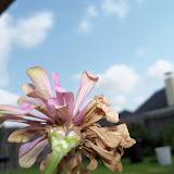 Gardening 2011 - 100_0146.JPG