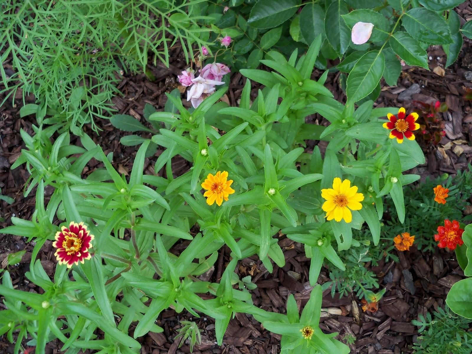 Gardening 2010, Part Two - 101_2439.JPG