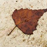 leaf-on-stone-IMG_1744.jpg